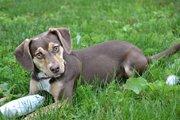 虐待を受けた過去を持つ子犬が虐待された3歳の女の子の命を救った!