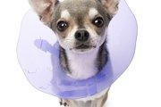 犬にエリザベスカラーを付けるときの4つの注意点