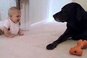 少しずつ近づいてくる赤ちゃんを見守るワンコ♡最後はほっこり♪