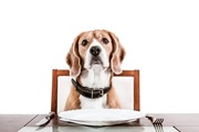 犬が盗み食いをする原因とやめさせる方法