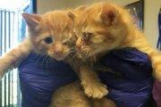 ゴミ箱から救出された子猫に献血をして命を救ったシュナウザー