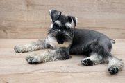 ドイツ原産の犬種6選