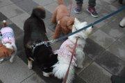 犬が物として扱われるのは何故?「器物損壊罪」と「動物愛護法」の違いとは