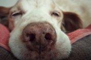 犬が寝ぼけているときに見せる3つの仕草