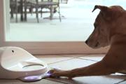 お留守番中の愛犬を退屈させない!犬専用のゲーム機ってなに?(まとめ)