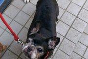 セカンドオピニオンの大切さ。私が体験した初めての「愛犬の不調」