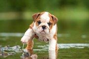 犬の水嫌いを克服するには?慣れてもらうための4つの方法