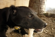 犬が噛むということ。噛み癖を直す訓練・しつけの方法