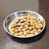 パピヨンに必要な5大栄養素について