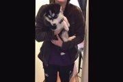 ハスキー犬の予想外過ぎる鳴き声に一同爆笑w(動画)