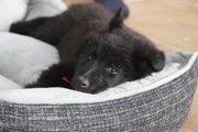 犬用のベッドの選び方について