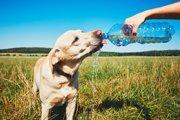犬の熱中症リスクを下げるためにやりたい12個の夏対策