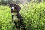 夏は要注意!草むらでのマーキングは危険がいっぱい!