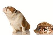 愛犬が小食なのはなぜ?気になる原因と対処法