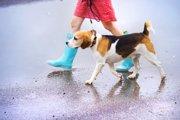 雨の日に愛犬の散歩をするのは危険?