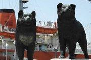 南極物語のモデルとなった樺太犬タロとジロの生涯とは(画像)