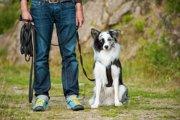 犬のトレーニング「ヒール」とは?その必要性と訓練方法
