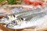 犬にも魚を!海の恵の栄養素を侮るなかれ!