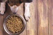 犬の精子が激減! 原因は市販のドッグフード?! 環境ホルモンの深刻な影響