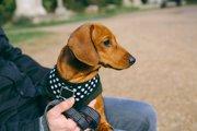 犬のハーネス人気ランキング