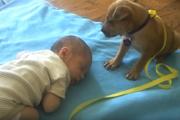 「なんだか眠くなってきた…」赤ちゃんにつられて眠くなる子犬