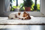 犬を留守番させるときにやってはいけない4つのNG行動