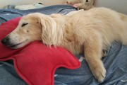 犬の床ずれの予防と対処方法について
