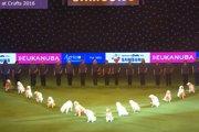 16匹のゴールデンレトリバーの精悍なパフォーマンス【動画】(まとめ)