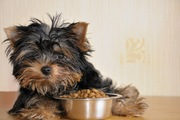 愛犬のフードにトッピング、知っておきたいこと、気をつけたいこと
