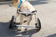 犬の車椅子の効果と活用法【取り戻そう、いつもの毎日】