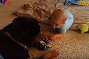 最高のベビーシッター!赤ちゃんと仲良く遊ぶ大型犬のロットワイラー