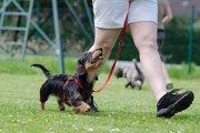 犬の散歩のしつけを基本から覚えよう!わんこのために覚えるべき2つのポイント