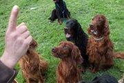 やんちゃ盛りを過ぎたら…落ち着いた犬に育てる方法!