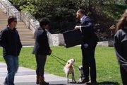 「1100万円で愛犬を譲ってほしい」と言われたらどうする?