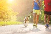 犬と一緒にジョギングをするメリットと気を付けたいこと