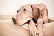 犬も筋肉痛になる?症状から原因、予防方法まで