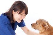 動物看護師の一日~動物が好きなだけでは続けられない仕事~