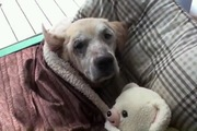 離れないからね!寝込む犬を心配そうに見守る奥さん犬