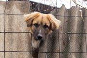 動物達が犠牲になっている「アニマル・ホーディング」という問題