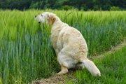 『5日出ないと危険!?』放置できない犬の便秘、その原因と対処法