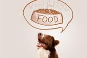 【ご飯ちょーだい!】愛犬の催促にやってしまいがちな間違った飼い主の行動