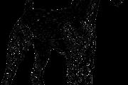 エアデールテリアの性格や特徴、飼い方・しつけ方