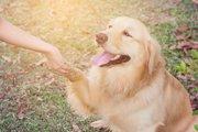 【救世主はワンコ】犬が人間の命を救った5つのエピソード