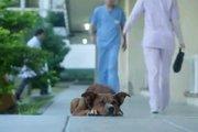突然亡くなってしまった飼い主を待ち続ける犬に起きた奇跡