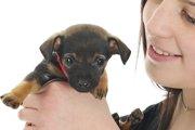 新しく愛犬をお迎えする前の基本チェック!みんなチャレンジ♪(まとめ)