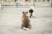 犬の写真をかわいく撮る3つのコツとおすすめテクニック
