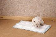 愛犬がはみ出してトイレしちゃう!飼い主にできる2つの対処法