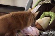 赤ちゃんとの初対面♪興味津々なワンコさんの反応