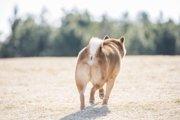 愛犬の「歩き方」でわかる病気の見極め方とは?