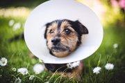 犬の蛋白喪失性腸炎の原因と症状、治療法から予防法まで